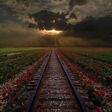 rail-road-tracks-at-sunset-through-the-flowers